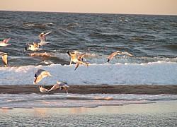 Mewy w ciepłych promieniach Słońca Bałtyku | fot. Huuba