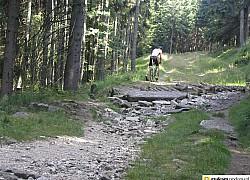 trasy rowerowe góry kaczawskie  | fot. tenet