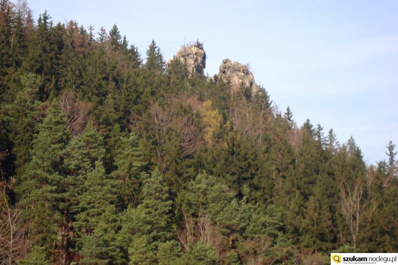 Sokoliki