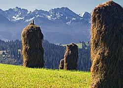 kopki-hay-481665_1920 | fot. uroburos Bronisław Dróżka