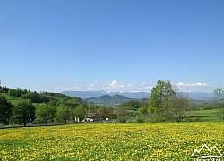 Żółty dywan mniszków w tle Sokoliki w szczyty Karkonoszy | fot. Tenet